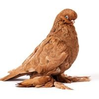 The American Pigeon Museum & Library