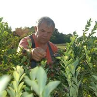 Wilson Blueberry Farm
