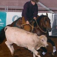Clark Performance Horses