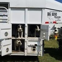 Satus Stockdogs