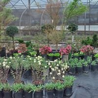 Greenworks Wholesale Nursery