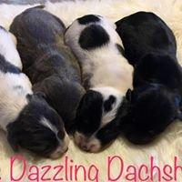 Rumor's Dazzling Dachshunds