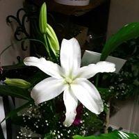 City Florist & Gifts, LLC