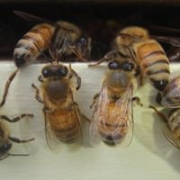 G&L Honey Farms Inc