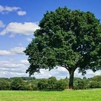Weavson Arborist