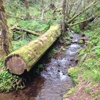 Gales Creek Trail