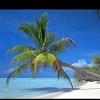 Palm Transportation LLC