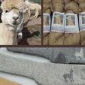 Worthington Acres Alpacas - farm & fiber mill