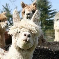Northern Prairie Alpacas, LLC