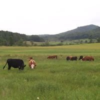 East Adirondack Cattle Company