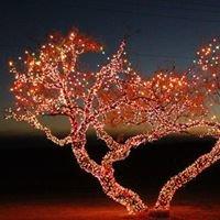 Shoops Christmas Light Show