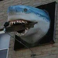 Shark's Tooth Bar