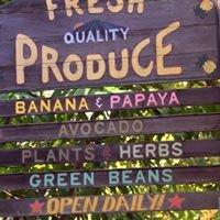 Josanna's Organic Garden