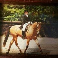 NC Sporthorse- Cornerstone Farm