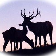 Elk County Elk Farm