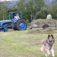 Harmony Farm Smallholding