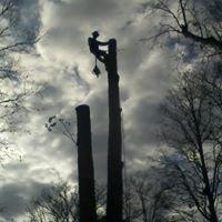 """Nature boyz tree service"""