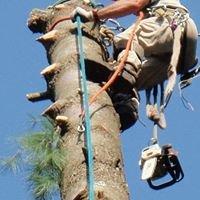 Greenleaf's Tree Service