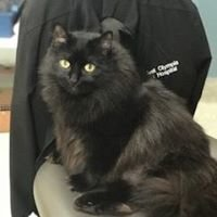 West Olympia Pet Hospital