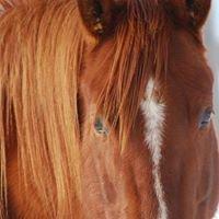 Fantasy Lane Farms Equine Boarding