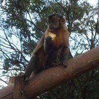 Projeto Ambiental Mata Dos Macacos