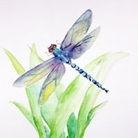 Dragonfly Collectibles LLC