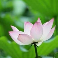 Self Compassion Yoga
