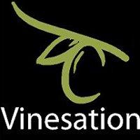 Vinesation Olive Oils and Vinegars