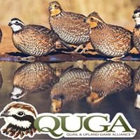 Quail & Upland Game Alliance - QUGA