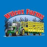 Wilcox Farms Corn Maze
