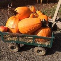 WillyTee's Pumpkin Patch