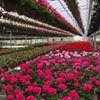 Wildhagen Greenhouses