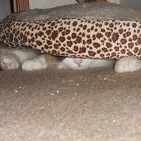Three Plump Kittens