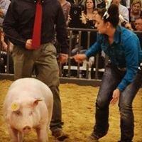 Morgan Girls' Show Pigs