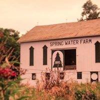 Spring Water Tree Farm