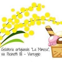 Gelateria La Mimosa Viareggio