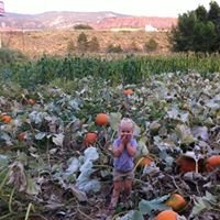 Robinson Family Pumpkin Patch