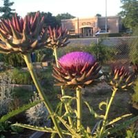 Hartsville Community Garden