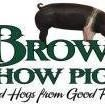 Brown Show Pigs
