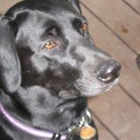 Bella's House Animal Rescue