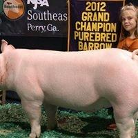 Minyard Show Pigs