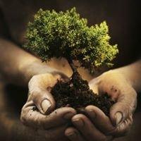 The Healing Tree Wellness Center