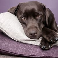 Nana-N-Paws Doggie Daycare, Training, Grooming & Sleepover Center