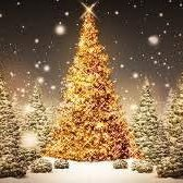 Christmas Trees - Wallasey and surrounding areas