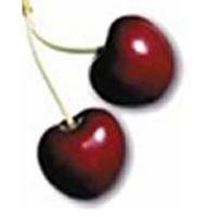 Cherrydale Plumbing & Home Improvements, LLC