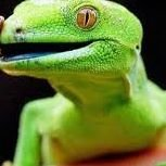 Rivera Reptilez