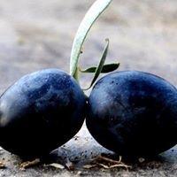 Canemre Zeytincilik - Canemre Olive Farm