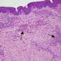 Affiliates in Dermatology