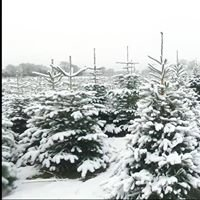 Christmas Tree Place, Berkhamsted