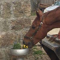 Pferdezucht Sanladerer